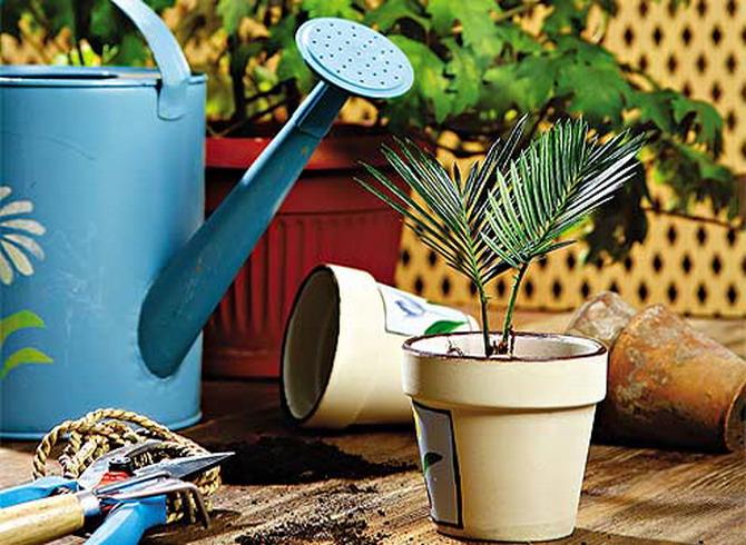 Как правильно ухаживать за комнатными растениями в теплое время года