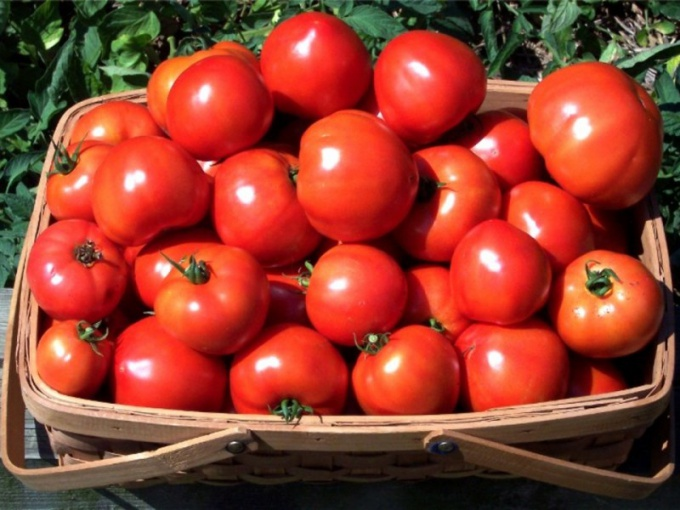 Как вырастить томаты на семена