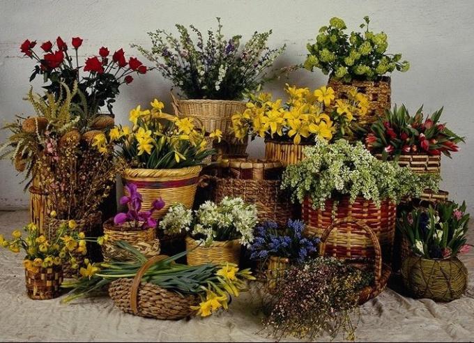 Как выбрать растения для дома