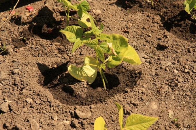 Какие семена быстрее всего прорастают