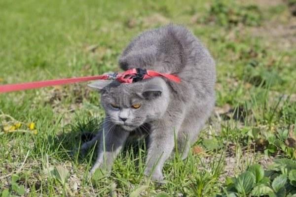 Как убедить мужа завести котенка