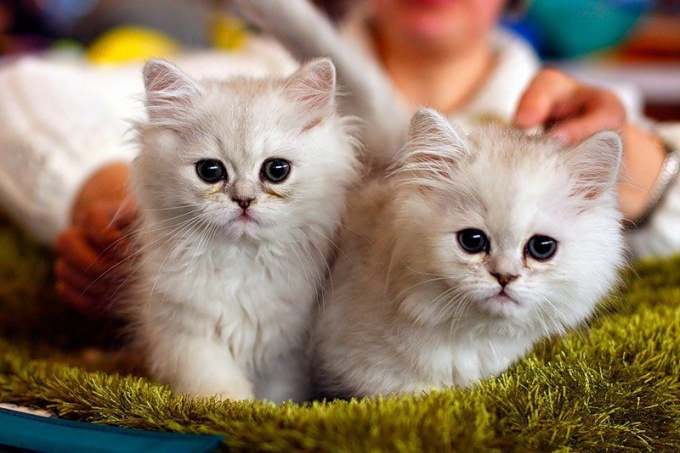 Для участия в выставке кошек необходимо собрать пакет документов