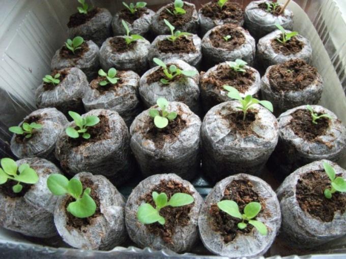 Проращивание семян в таблетке