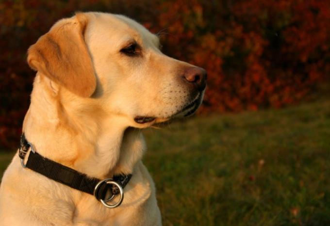 Какие особенности зрения у собак