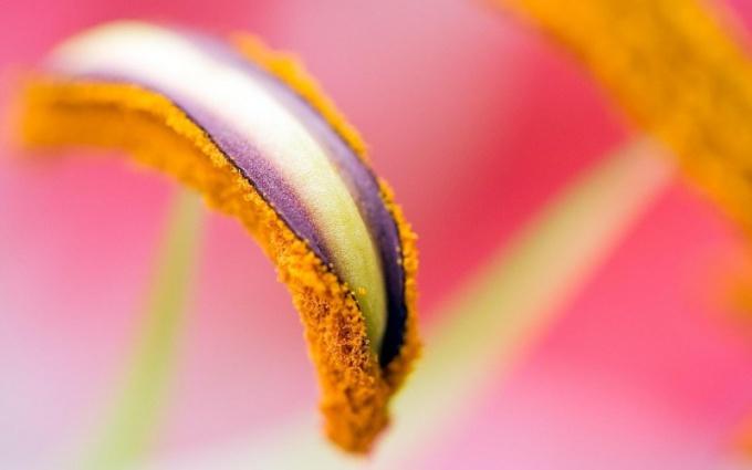 Какими способами размножаются растения