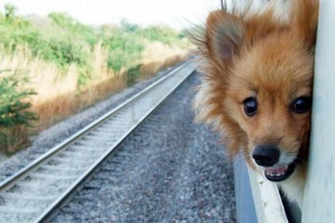 Перевозка собаки в поезде