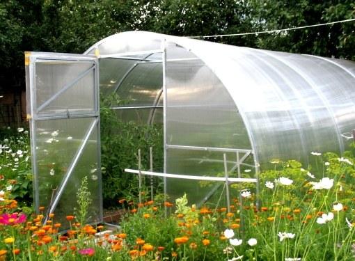 В теплицу можно сажать семена помидоров и огурцов