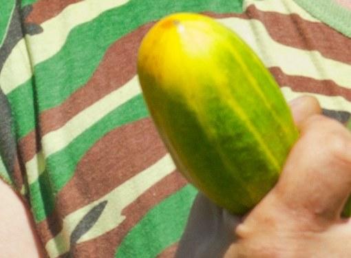 Семена гибридов не повторяют родительские признаки
