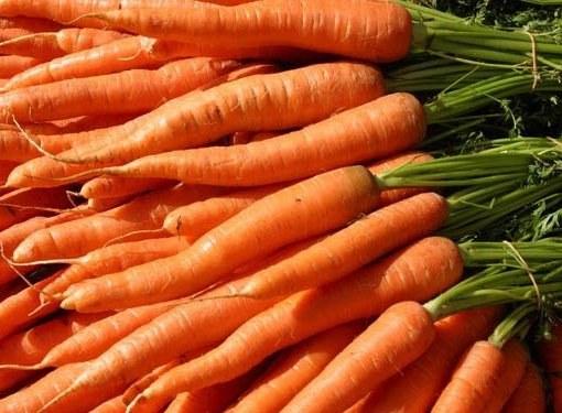 Как выбрать лучшие семена моркови
