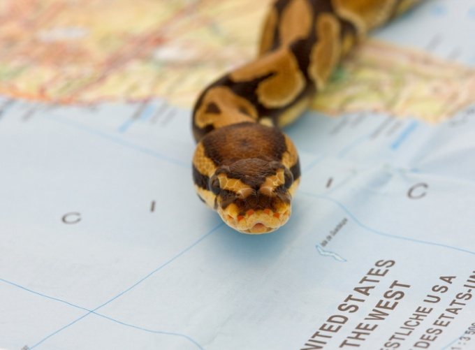 Как быть, если укусила змея