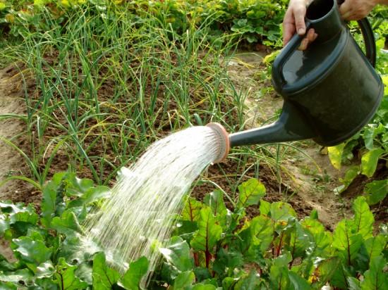 Как поливать овощи на огороде