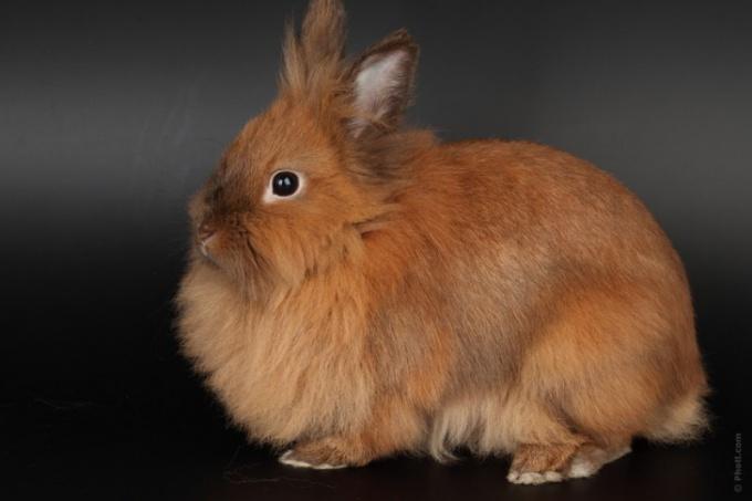Как выбрать породу кролика