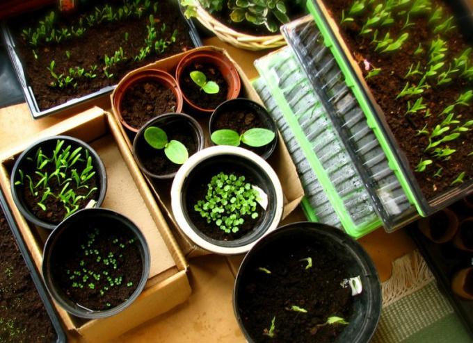 Как подготовить семена для посева