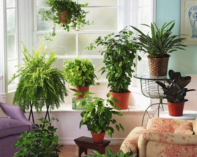 Как выбрать грунт для домашних растений