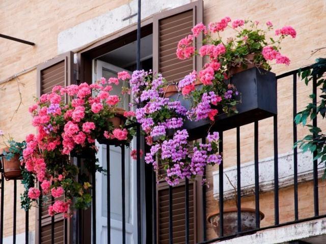 Как выбрать горшок для вьющихся цветов