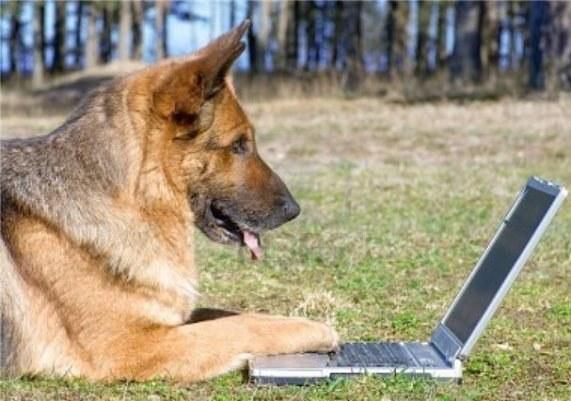 Есть ли интеллект у животных
