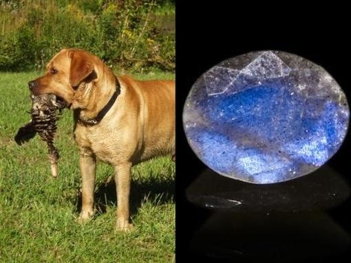Лабрадор: слева - ретвивер с уткой,справа - ограненный камень