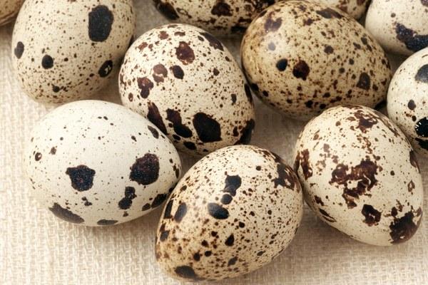 Какова норма потребления перепелиных яиц