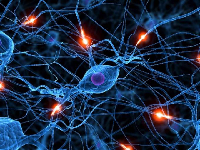 Какие функции выполняет нервная система