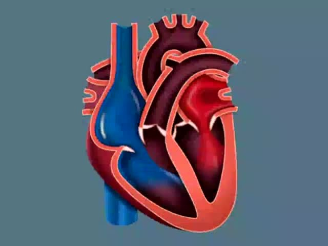 Как работают клапаны сердца