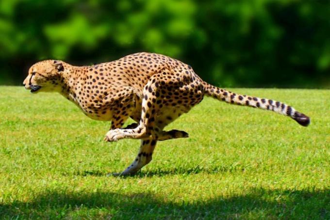 Какие животные самые быстрые