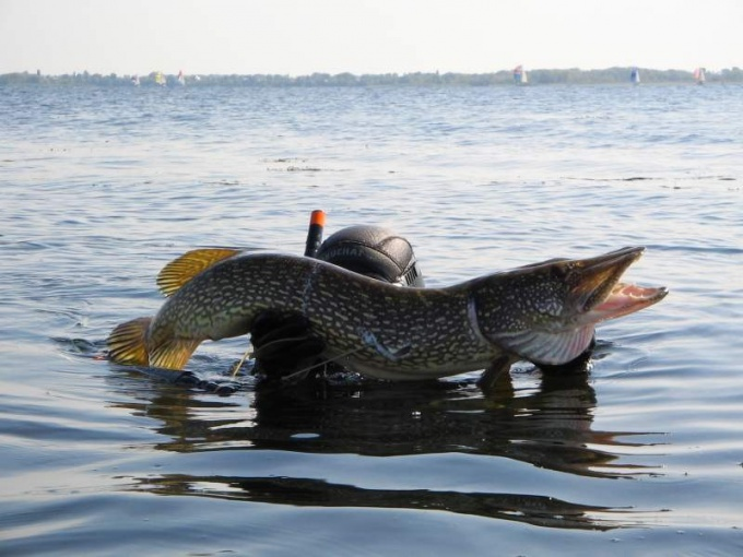 Подводная ловля рыбы