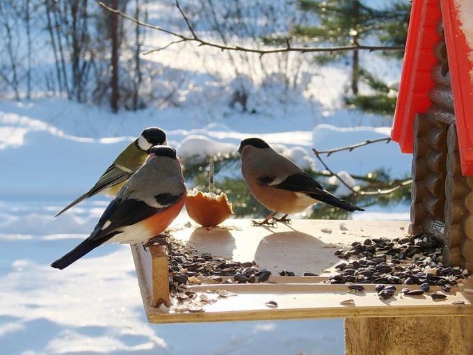 Чтобы помочь птицам пережить зиму, их нужно подкармливать!