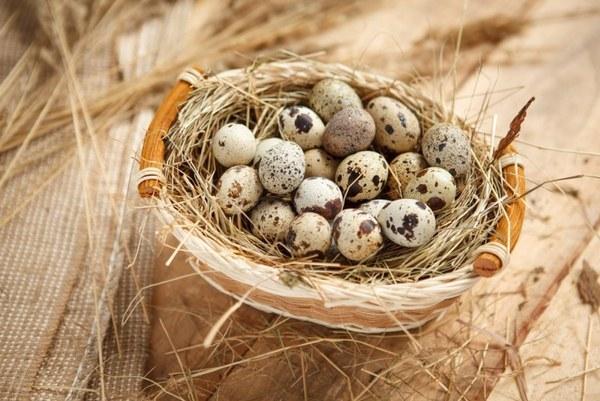 С перепелиными яйцами можно приготовить множество вкусных и полезных блюд