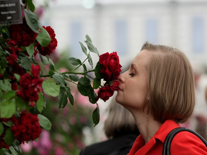 Как нос распознает запахи
