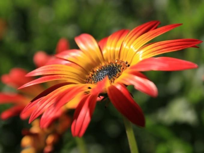 Как происходит опыление цветов