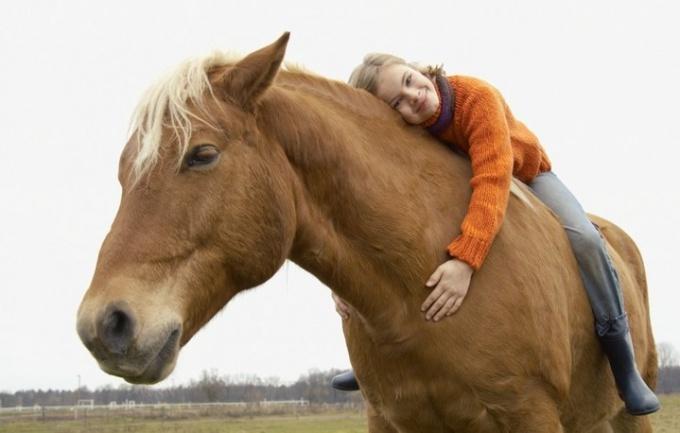 Как лечить лошадьми