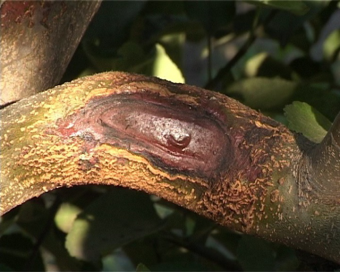 Putty isolation on a tree branch