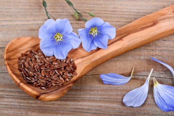 Можно ли есть сырыми семена льна