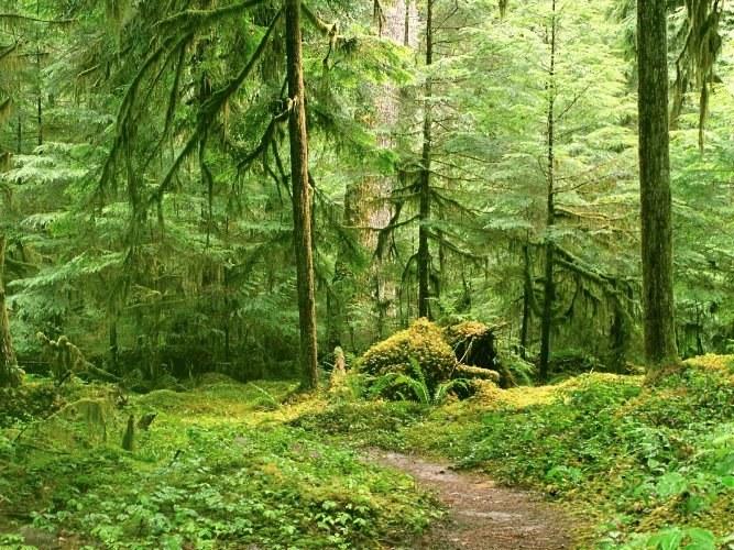 Почему леса называют зелеными легкими