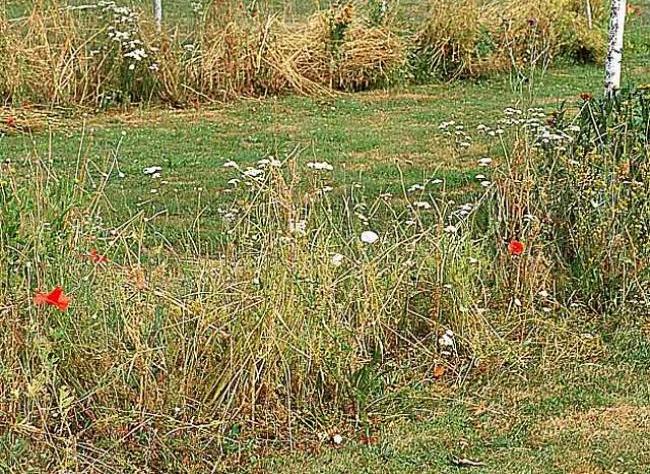 Как восстановить сад после отпуска