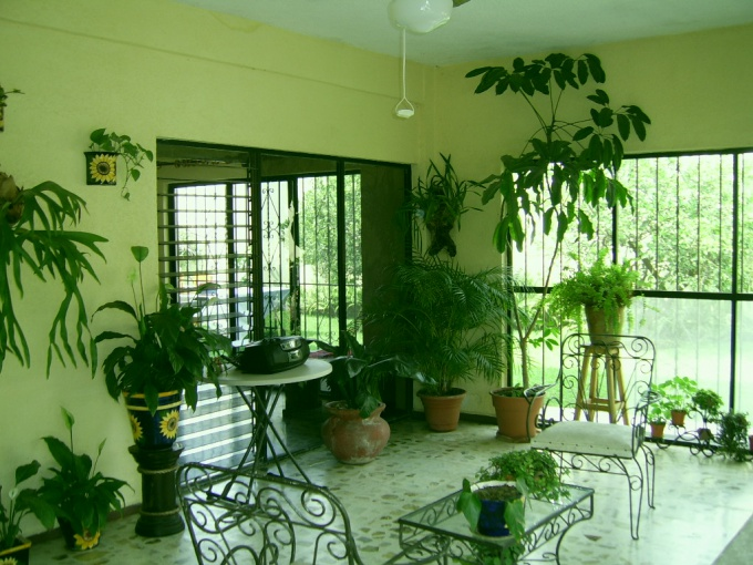According to Feng Shui, each plant should occupy in the house of a certain place