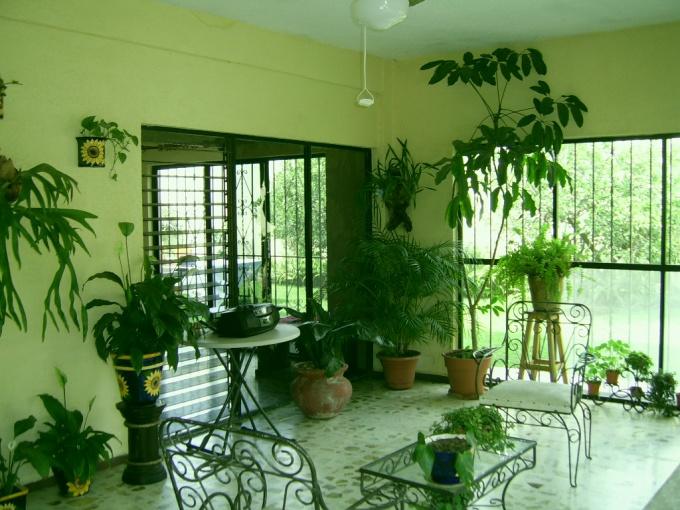 Согласно фен-шуй, каждое растение должно занимать в доме определенное место