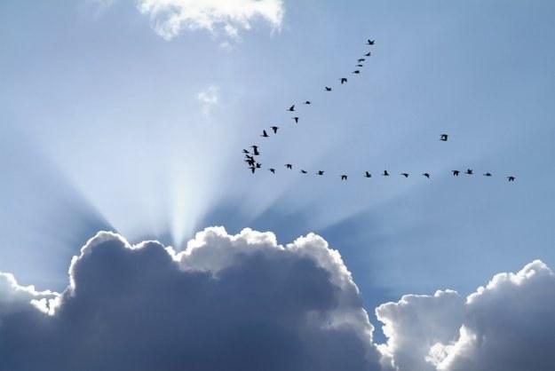 Какие бывают перелетные птицы