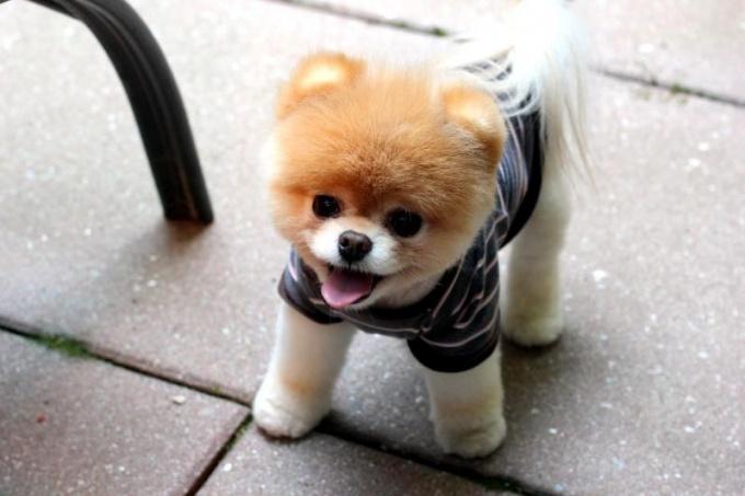Заводить собаку – дело очень ответственное