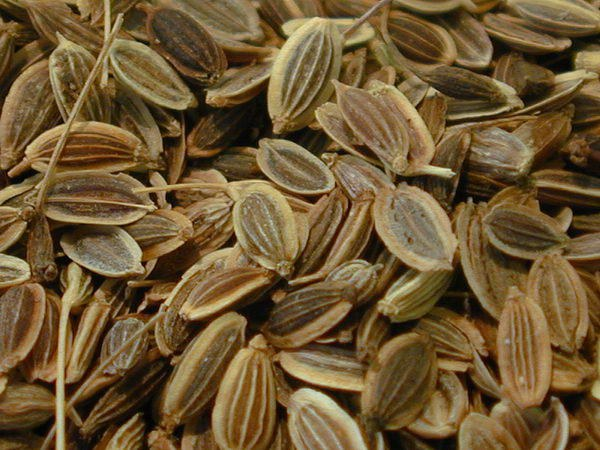 Fennel seeds as a diuretic