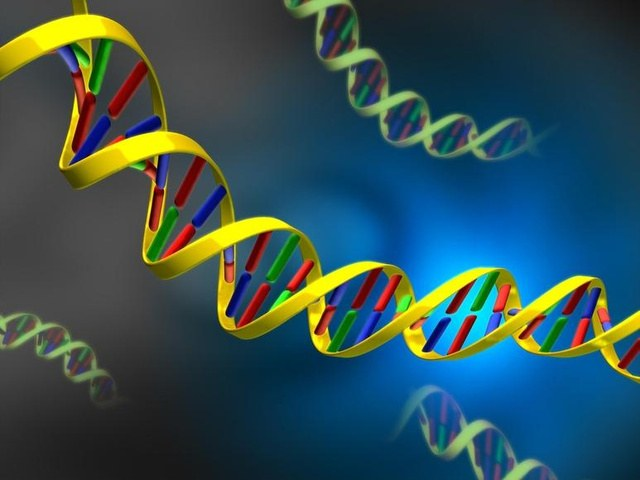 Как передается генетическая информация