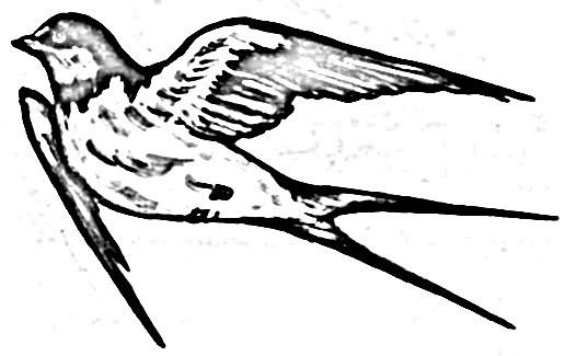 Мягким карандашом нарисуйте перья