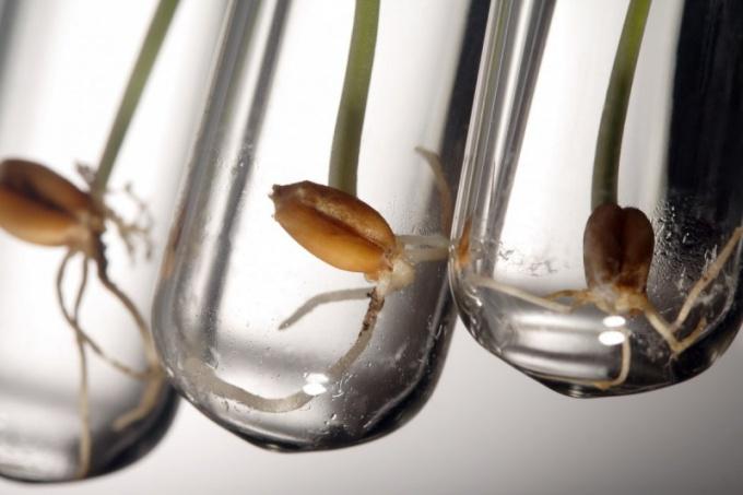 Замачивание и проращивание семян