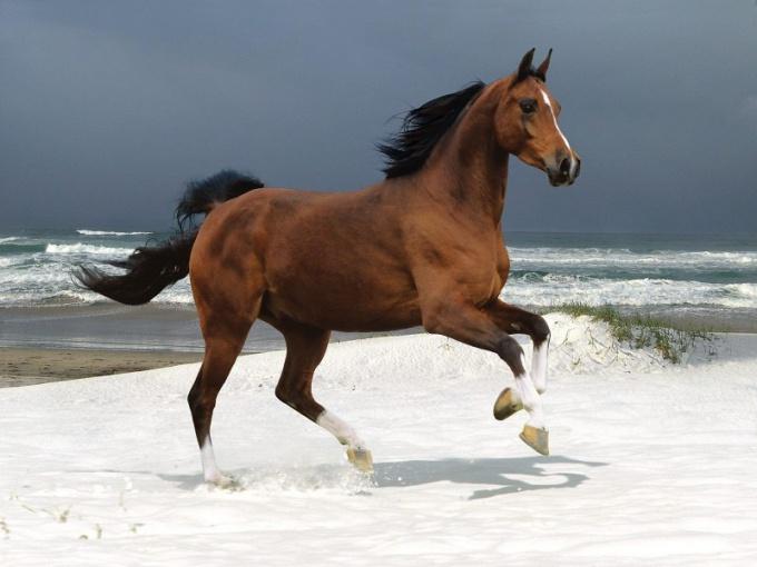 Какого коня называют гнедым