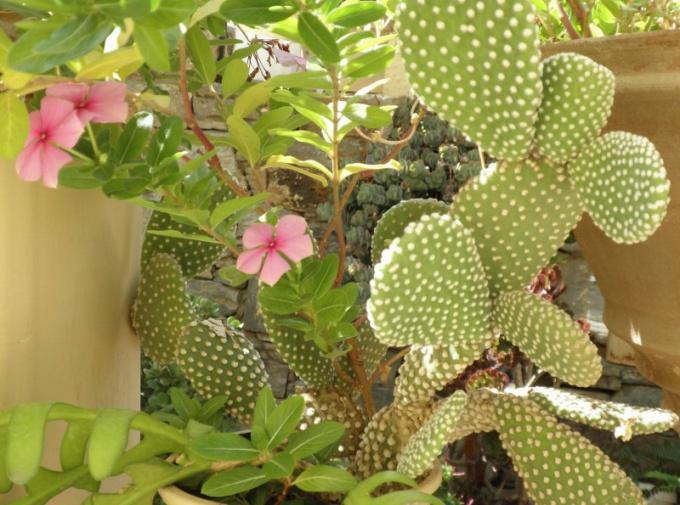 Правильный уход помогут вырастить растение, которое будет радовать глаза