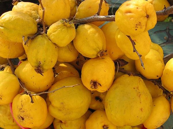 От каких фруктов бывает запор