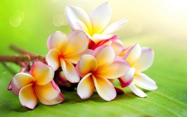 Как цветет жасмин