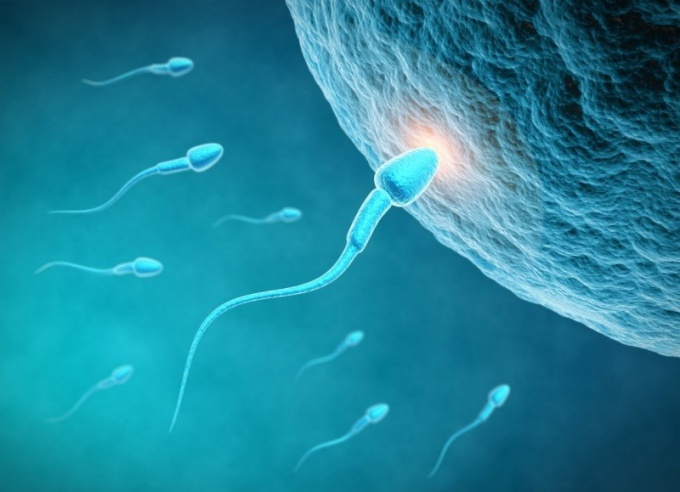 Как происходит оплодотворение яйцеклетки  в 2018 году