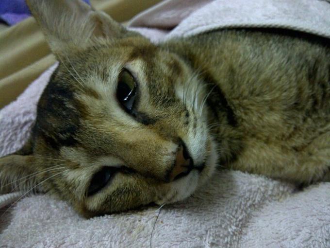 A sick cat