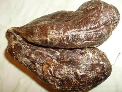 От каких болезней помогает бобровая струя